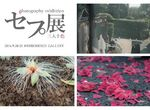 【フォト科 卒業生情報!】田島可奈子さん、甲斐千絵里さん、イチカワミキさんよる写真展示イベント『セプ展』が9/20~9/25の5日間弘重ギャラリーにて開催します!